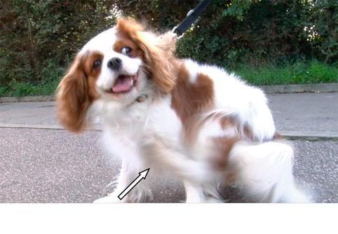 Veterinary Aspects | SpringerLink