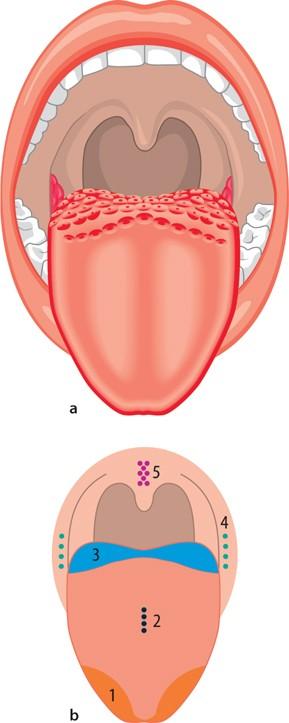 Anatomie und Physiologie | SpringerLink
