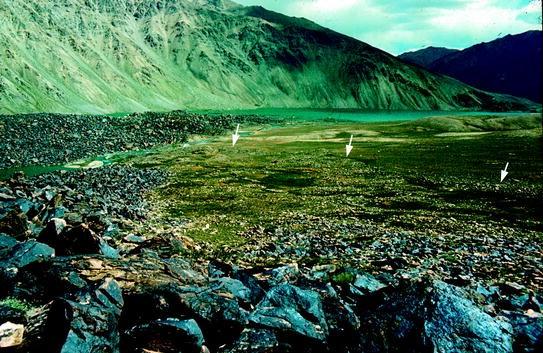Geological Prerequisites for Landslide Dams' Disaster Assessment ...