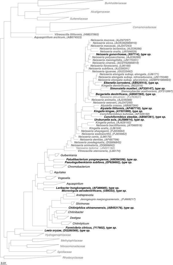 The Genus Neisseria   SpringerLink