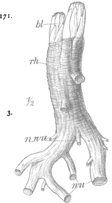 Fig. 43