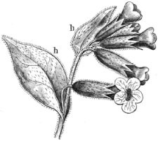 Fig. 213