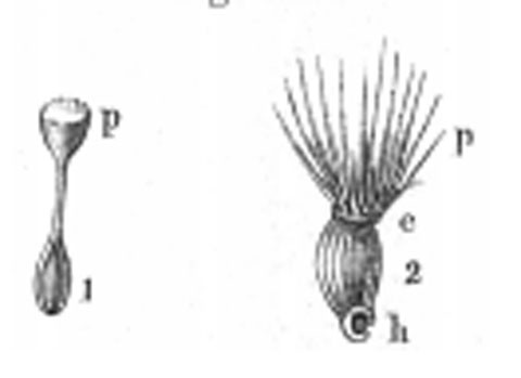 Fig. 447