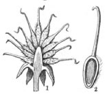 Fig. 448
