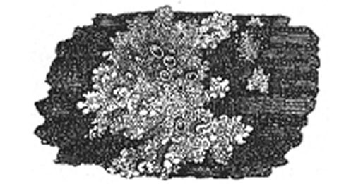 Fig. 478