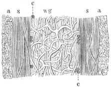 Fig. 479