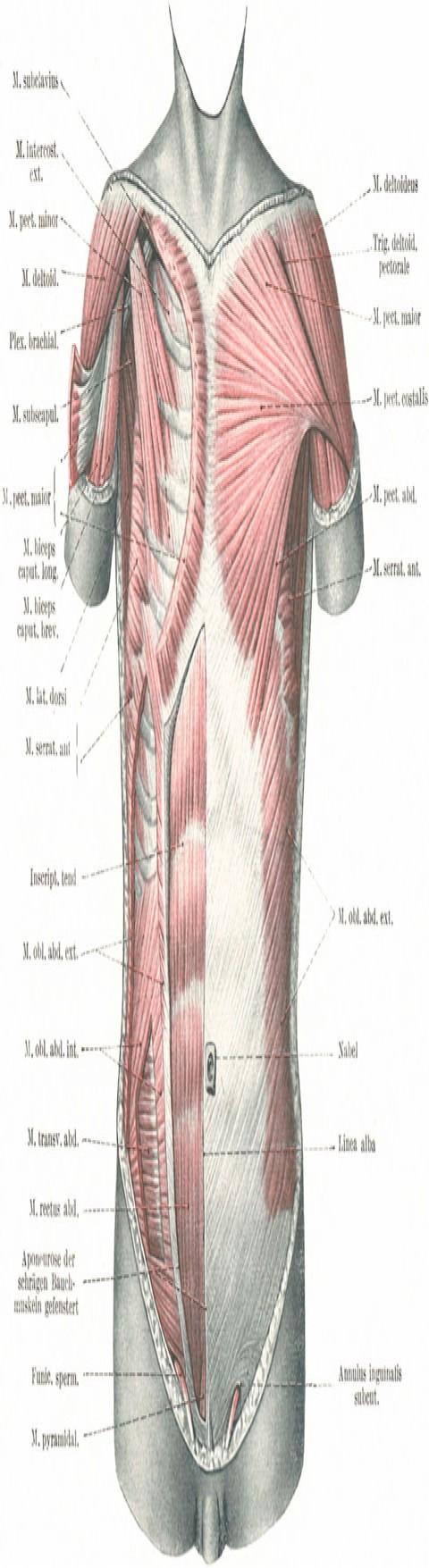 Abb. 190