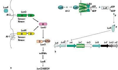 Molekulare Struktur und Regulation prokaryotischer Gene   SpringerLink