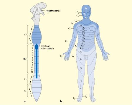 Die neurologische Untersuchung und die wichtigsten Syndrome ...