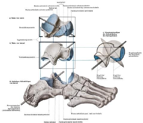 Manuelle Therapie und Rehabilitation am Fuß | SpringerLink