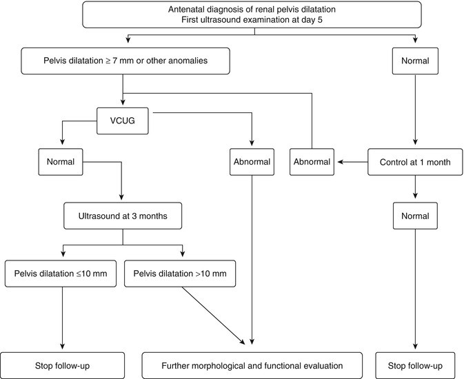 Antenatal essment of Kidney Morphology and Function ... on