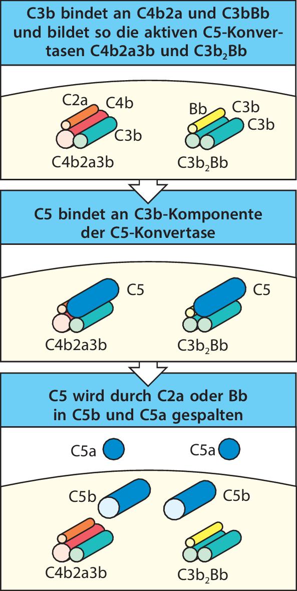 Abb.2.29