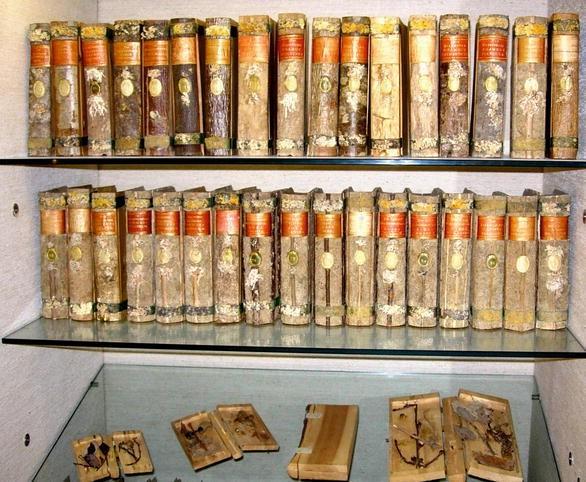 Pflanzenanatomie von der frühen Neuzeit bis 1800   SpringerLink