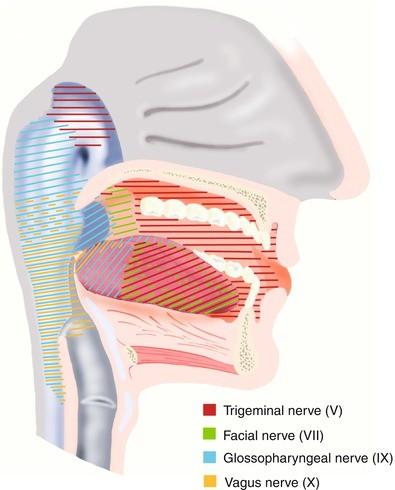 trigeminus hipertónia