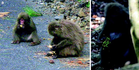 helminth infection of macaques)
