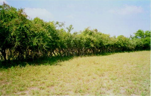 Agroforestry as a Strategy for Livelihood Security in the