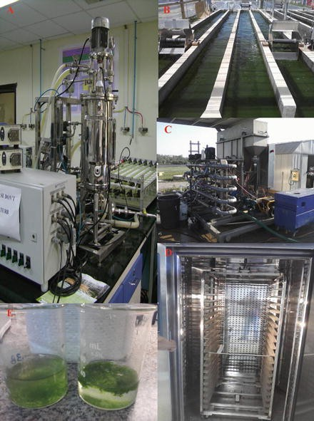 Microalgae as an Attractive Source for Biofuel Production ...