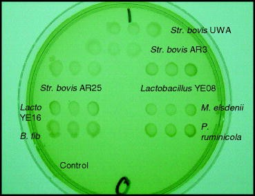 Screening Plants for the Antimicrobial Control of Lactic Acidosis in