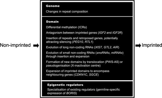 The Evolution of Genomic Imprinting – A Marsupial