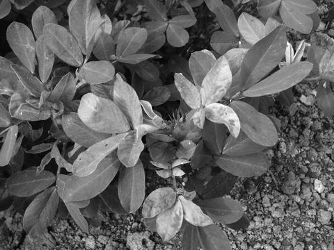 Detection of Virus and Viroid Pathogens in Plants | SpringerLink