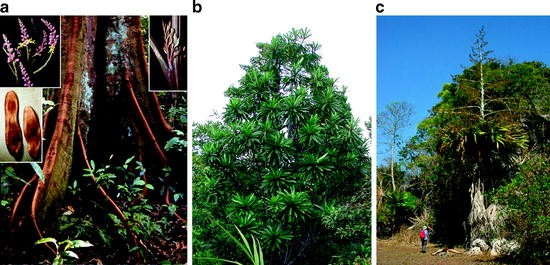 Age-Related Changes in Tree Growth and Functional Biology: The ...