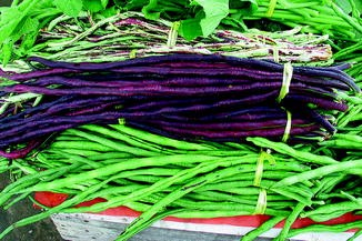 Red Bean Seeds Vigna Unguiculata Seeds Long Bean Vegetables Seeds Home WST 03