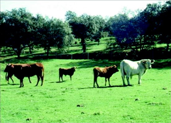 Past, Present and Future of Agroforestry Systems in Europe