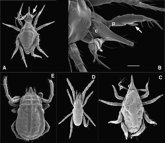 Mites in Soil and Litter Systems | SpringerLink