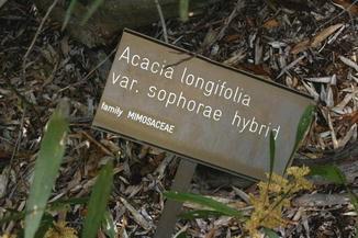 Acacia Longifolia Springerlink