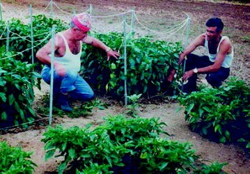 Management Of Virus And Viroid Diseases Of Crops In The Tropics Springerlink