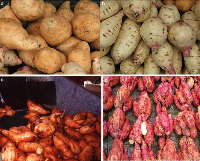 Ipomoea batatas | SpringerLink