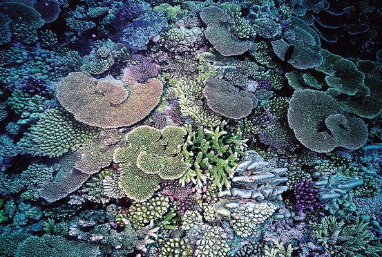 Photosymbiosis In Past And Present Reefs Springerlink