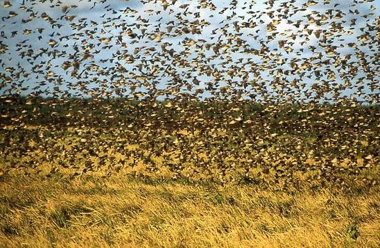 Roots /& Shoots Flock Grass /& Stone Effect Garden Ornament Duck