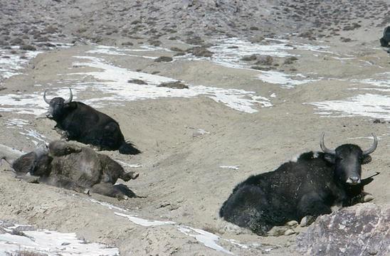 Animal's Functional Role in the Landscape | SpringerLink