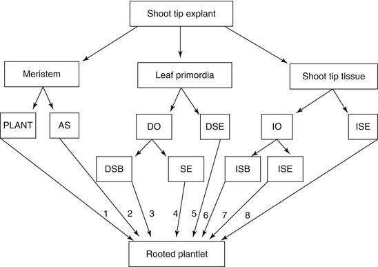 Date Palm Status and Perspective in Kuwait | SpringerLink