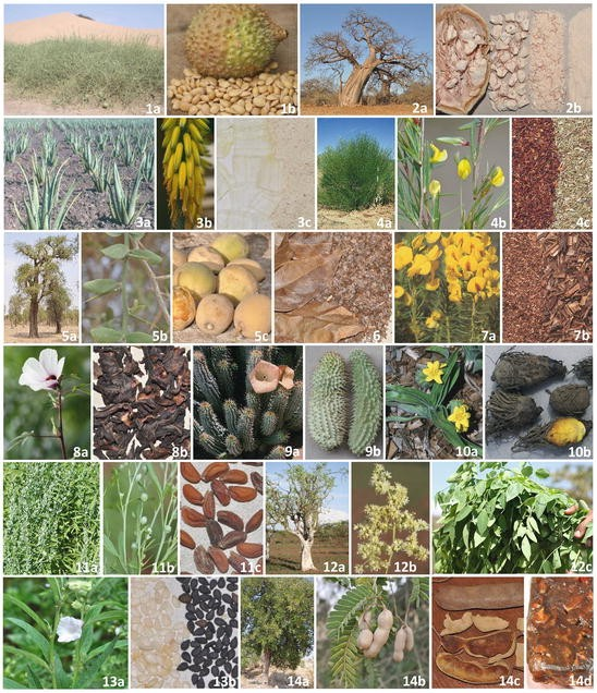 A Review of African Medicinal and Aromatic Plants   SpringerLink