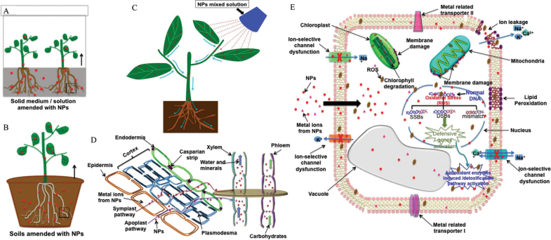 Nanomaterials | SpringerLink