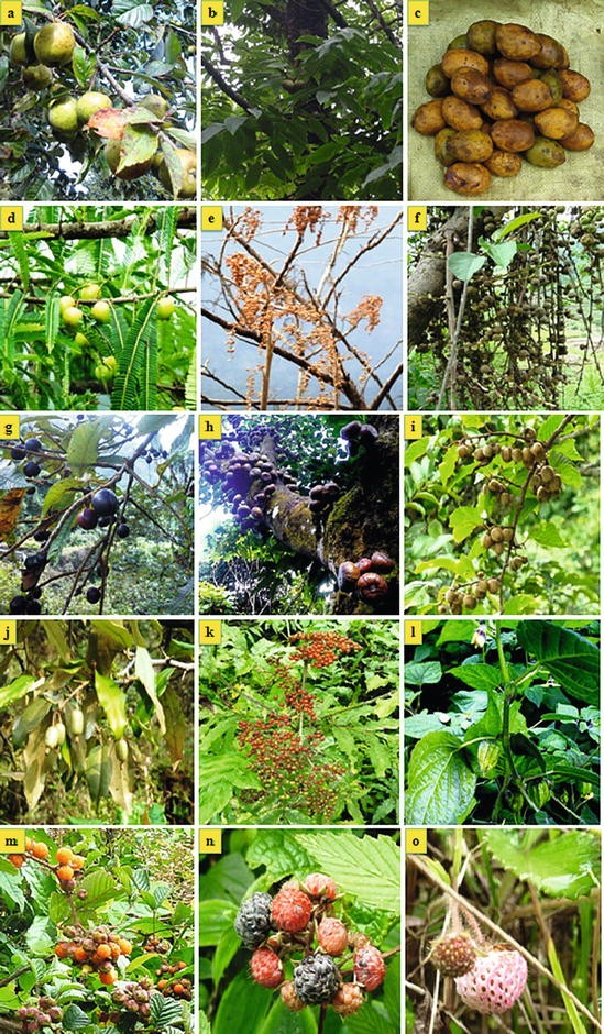 Bioresources of Nagaland: A Case of Wild Edible Fruits in