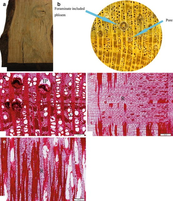 Wood Resources, Identification, and Utilization of Agarwood
