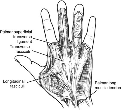 Functional Anatomy Examination And Functional Assessment Of Hands