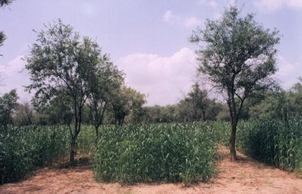 Agroforestry for Increasing Farm Productivity in Water-stressed