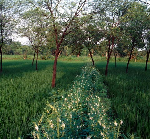 Traditional Agroforestry Systems | SpringerLink
