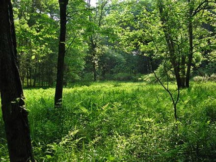 Soil and Water Conservation in Ravinous Watersheds: Case