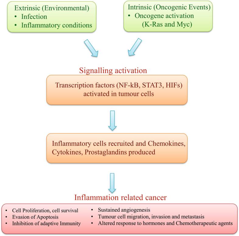 Cancer RNome: Evolution and Sustenance | SpringerLink