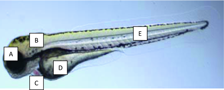 Fig.2.