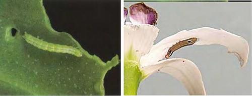 Orchids | SpringerLink