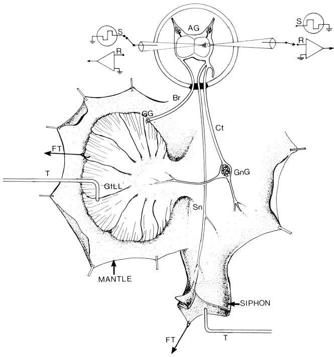 4 Channel Car Amplifier Diagram