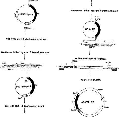 Molecular Approaches to AIDS Vaccine Development Using Baculovirus