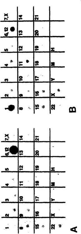 Detection of Chimerism in YAC Clones | SpringerLink