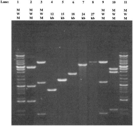 Amplification Of Genomic Dna By Pcr Springerlink